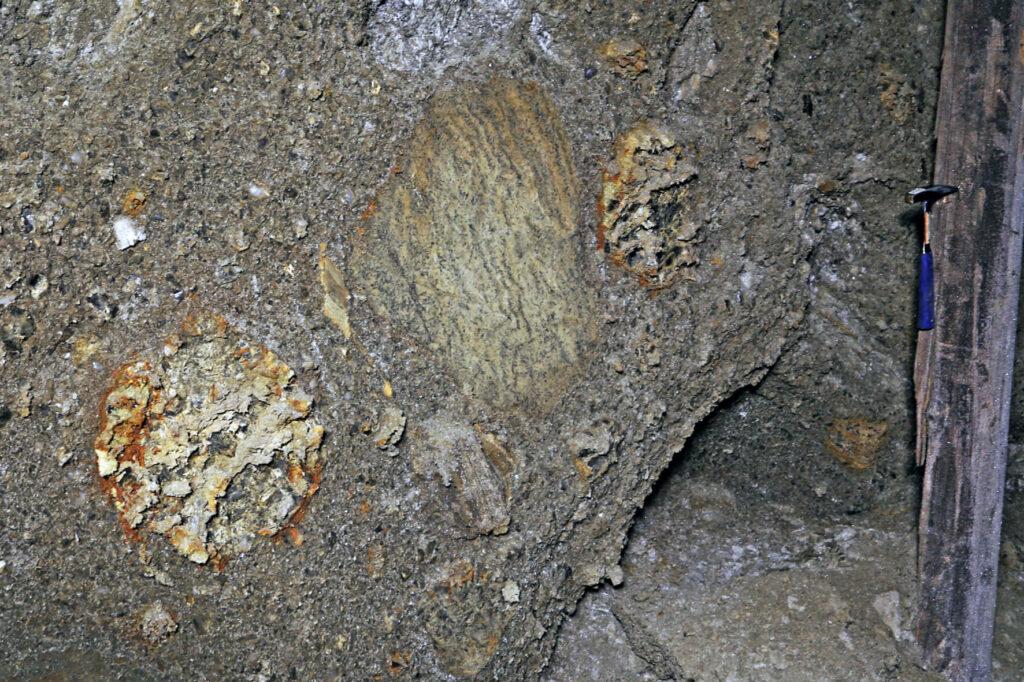 Małe bryly soli zielonych - typowa (w centrum) i wielkorystaliczne (witrażowe) tkwiące w zubrach