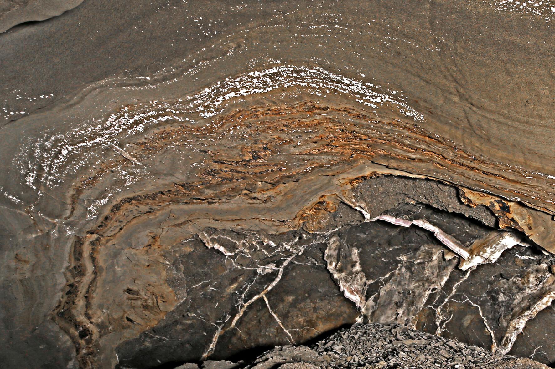 Uwęglone szczątki mioceńskiej flory w solach spizowych