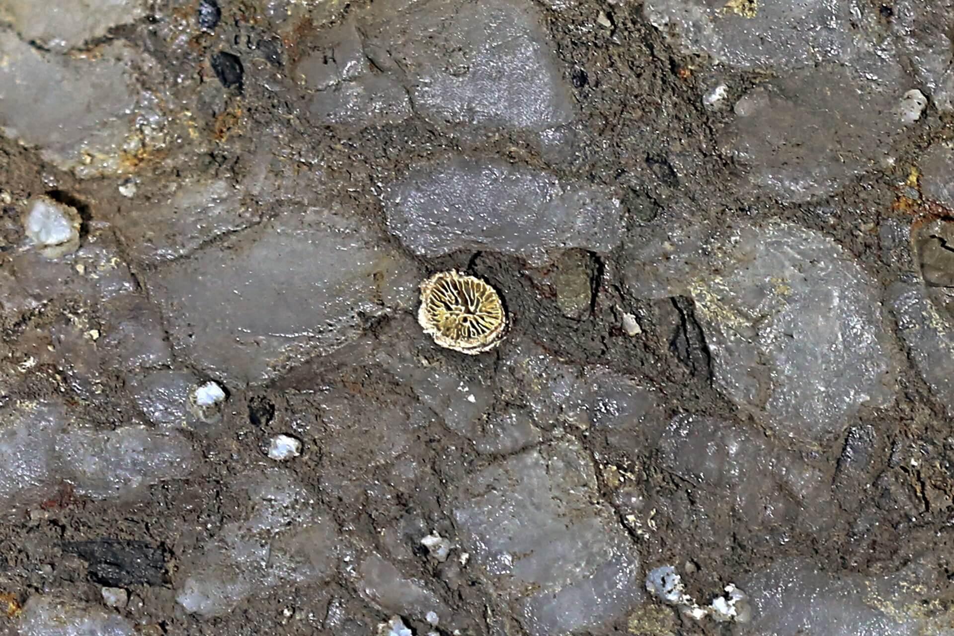 Skamieniałość koralowca uwięziona w soli